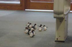 Penguins by the door