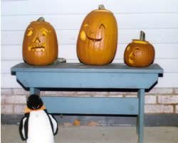 Puron and three  jack-o-lanterns