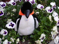 Puron the penguin with flowers