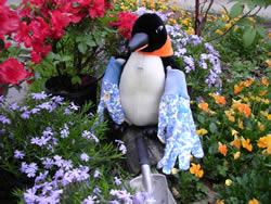 Puron the penguin gardening