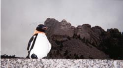 Puron the penguin at Mt Rushmore