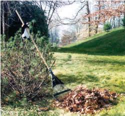 Puron the penguin raking leaves