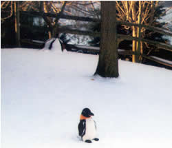 Puron the penguin in the snow